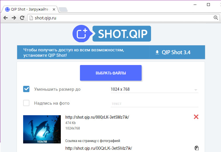 QIP Shot